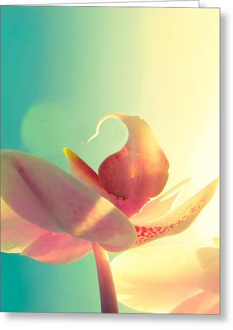 Orchid Greeting Cards - Melody Greeting Card by Amy Tyler
