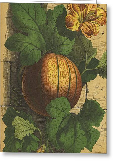 Melon Drawings Greeting Cards - Melon Greeting Card by Anon