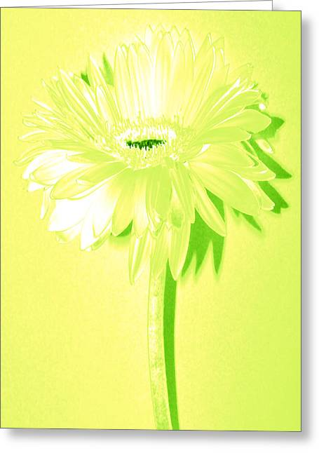 Sunburst Floral Still Life Greeting Cards - Melon Ball Zinnia Greeting Card by Sherry Allen