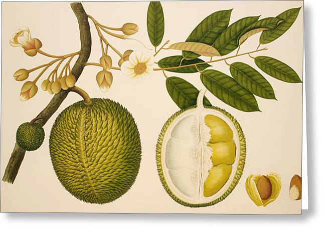 Melon Paintings Greeting Cards - Melon Greeting Card by Mountain Dreams