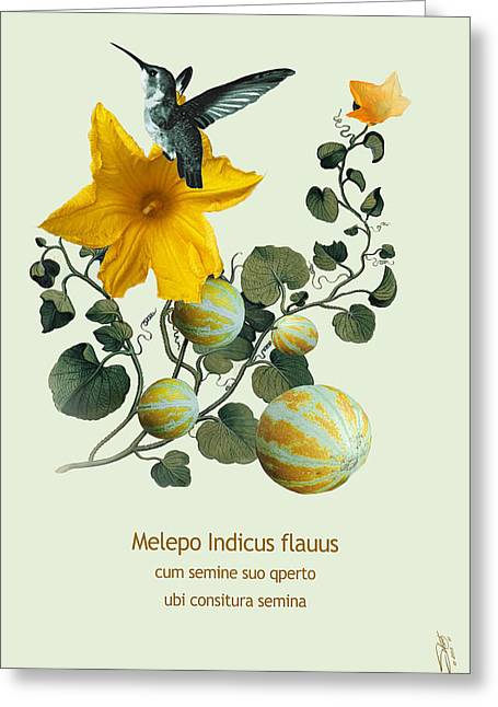 Melon Digital Greeting Cards - Melon Vine and Hummingbird Greeting Card by Schwartz