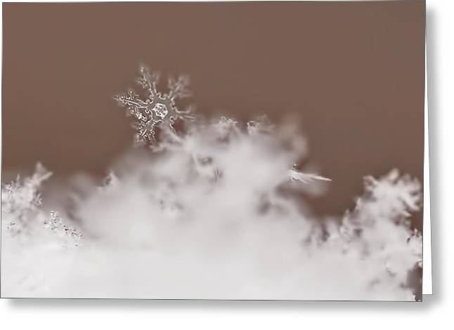 Snow Flakes Greeting Cards - Melting Slowly Greeting Card by Rona Black