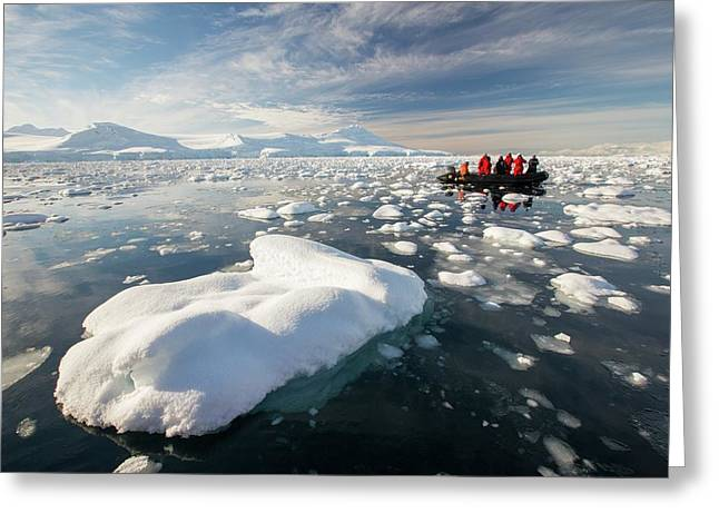 Members Of An Expedition Cruise Greeting Card by Ashley Cooper
