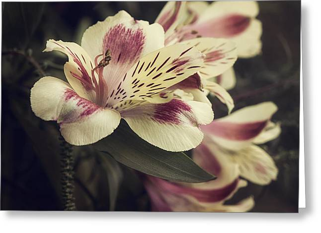 Peruvian Lily Greeting Cards - Memories Greeting Card by Darlene Kwiatkowski