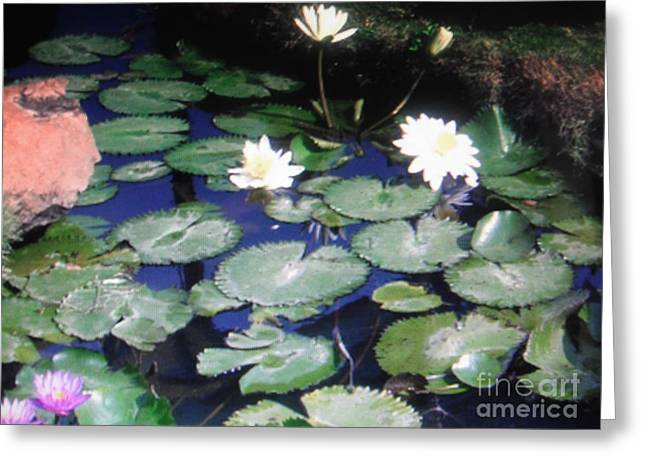 Memory Pyrography Greeting Cards - Memories of Chanai lotus Greeting Card by Iris Boyd-cherian
