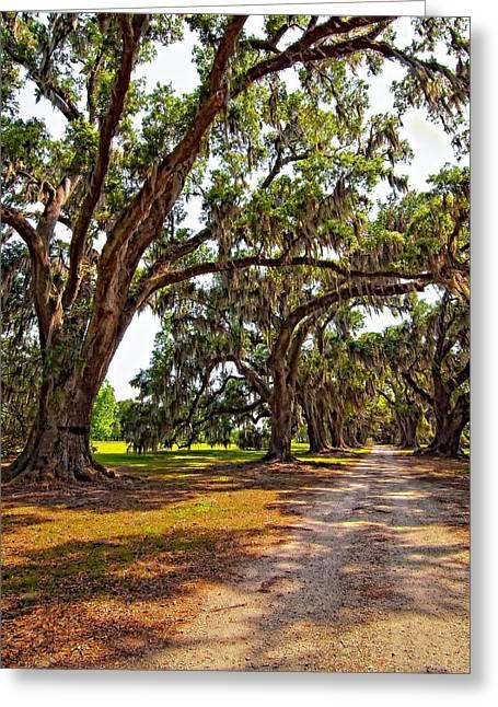 Evergreen Plantation Photographs Greeting Cards - Memory Lane Greeting Card by Steve Harrington