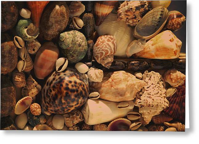 Shell Collecting Greeting Cards - Memory of the Sea Greeting Card by Jenny Rainbow