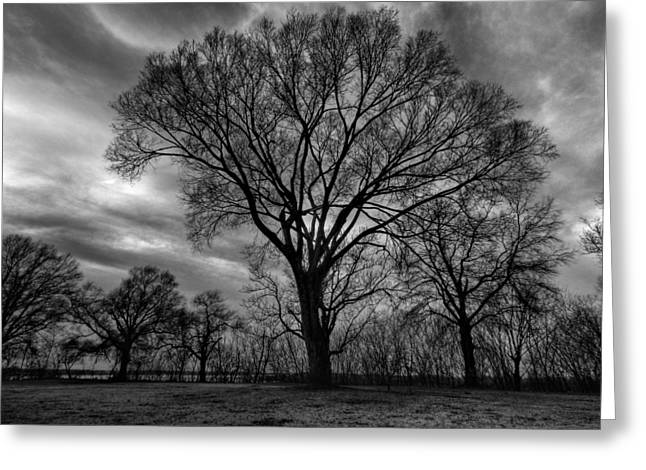 Bare Trees Greeting Cards - Memphis Winter on the Mississipi 001 Greeting Card by Lance Vaughn