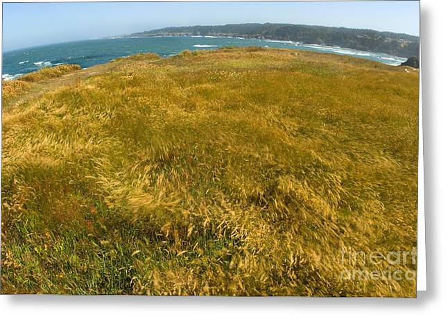 Californian Greeting Cards - Mendocino Headlands, California Greeting Card by Ron Sanford