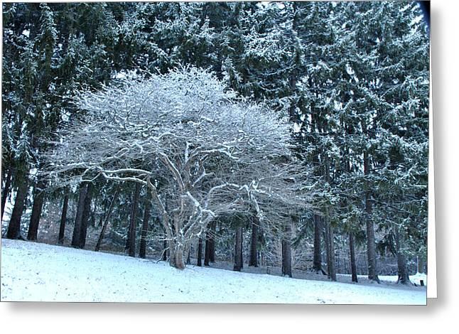 Mendon Greeting Cards - Mendon Ponds Park New Snow Greeting Card by Wayne Sheeler