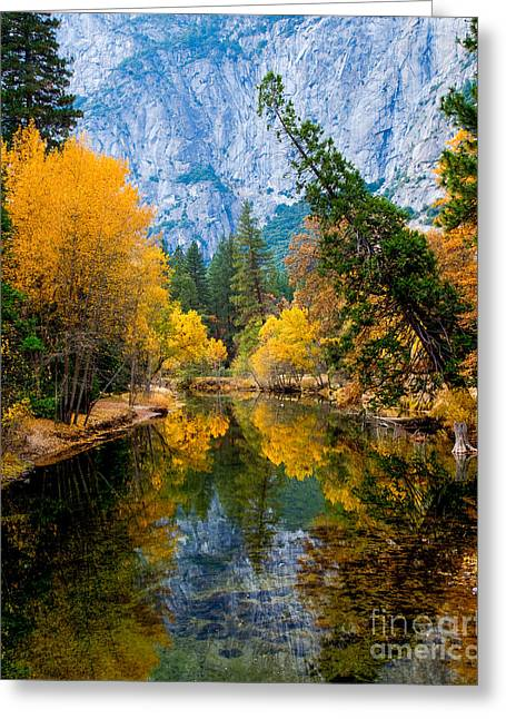 Terry Garvin Greeting Cards - Merced River and Leaning Pine Greeting Card by Terry Garvin