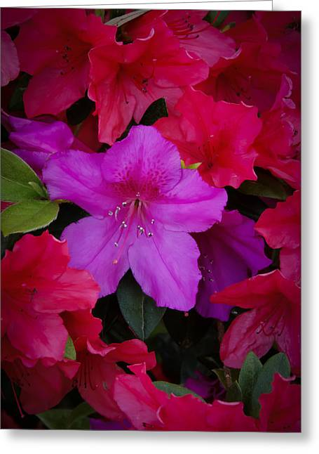 Merging Greeting Cards - Merging Azaleas 2 Greeting Card by Penny Lisowski