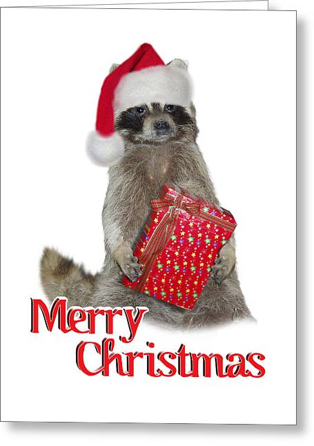 Raccoon Digital Art Greeting Cards - Merry Christmas -  Raccoon Greeting Card by Gravityx9 Designs