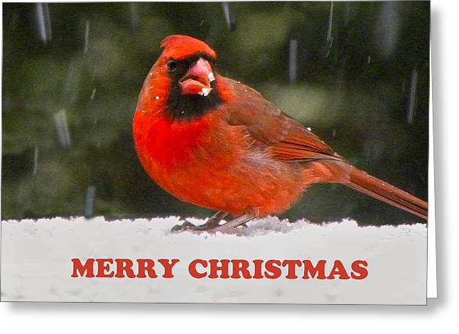 Cardinals. Wildlife. Nature. Photography Greeting Cards - Merry Christmas Cardinal Greeting Card by Sandi OReilly