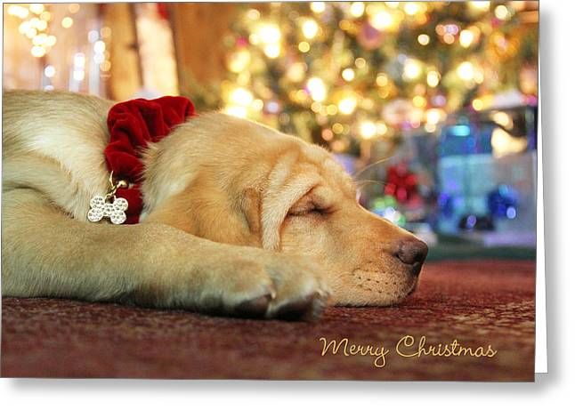 Lab Digital Art Greeting Cards - Merry Christmas from Lily Greeting Card by Lori Deiter