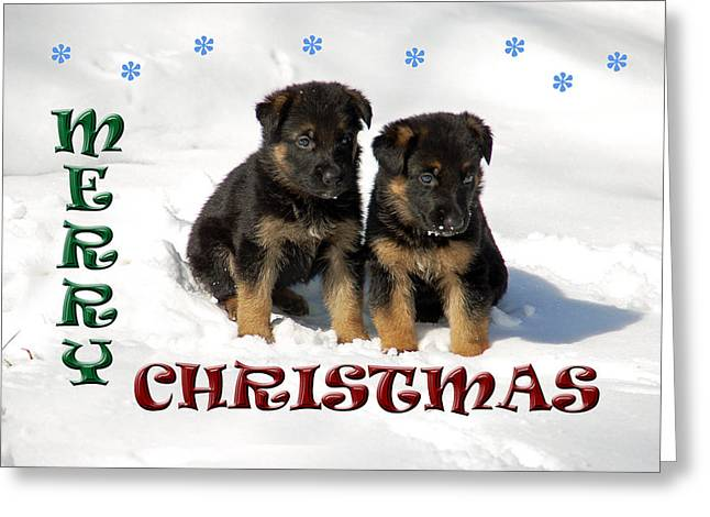 Shepherds Greeting Cards - Merry Christmas Puppies Greeting Card by Aimee L Maher Photography and Art
