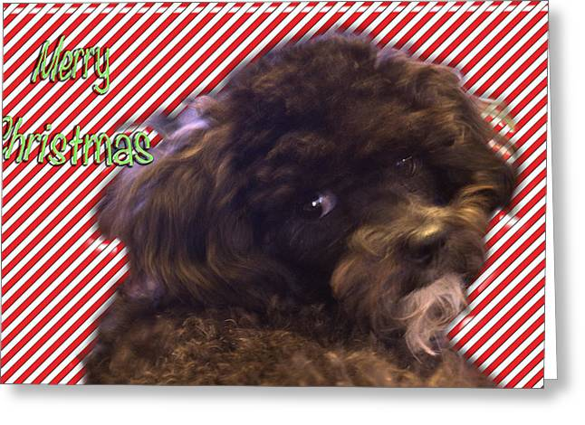 Oreo Greeting Cards - Merry Christmas Greeting Card by Terry Anderson