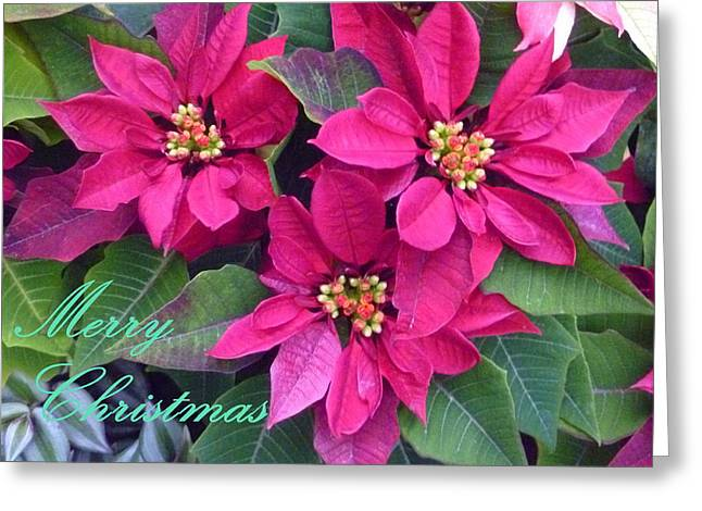 Euphorbiaceae Greeting Cards - Merry Christmas To You Greeting Card by Lingfai Leung