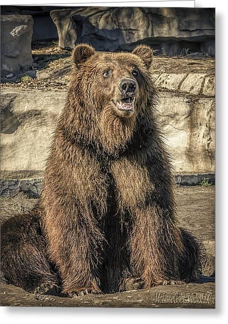 Mammals Greeting Cards - Merry Grizzly Bear     Greeting Card by LeeAnn McLaneGoetz McLaneGoetzStudioLLCcom