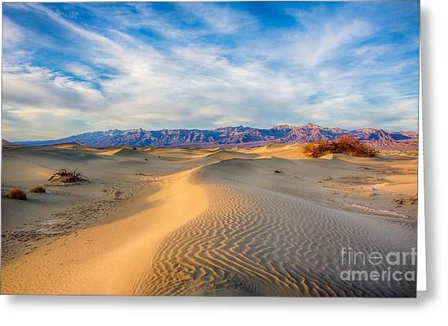 Death Valley Greeting Cards - Mesquite Dunes Greeting Card by Mimi Ditchie