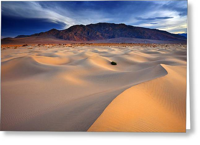 Death Valley National Park Greeting Cards - Mesquite Gold Greeting Card by Darren  White