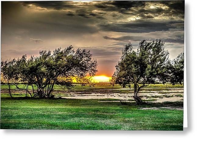 Galveston Greeting Cards - Mesquite Sunset HDR Greeting Card by David Morefield