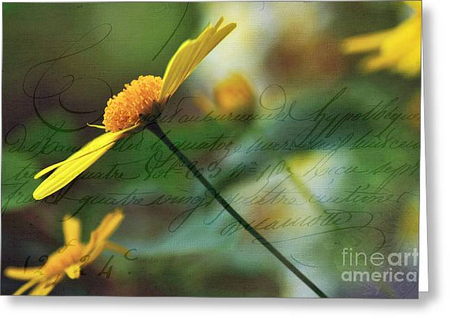 Francais Greeting Cards - Message in a Daisy Greeting Card by Kaye Menner