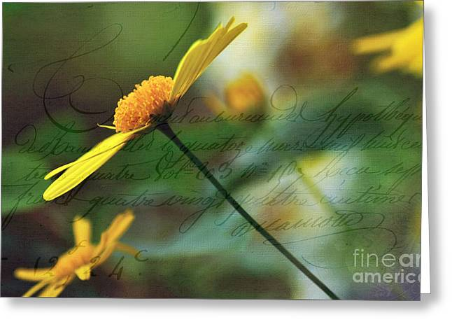 Daisy Bud Greeting Cards - Message in a Daisy Greeting Card by Kaye Menner