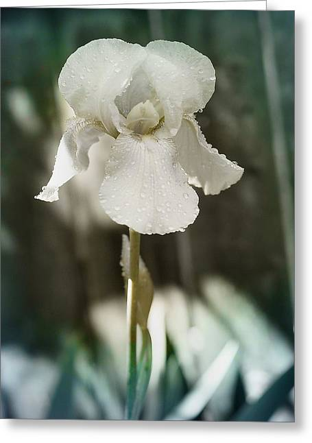 Flora Images Greeting Cards - Messenger of Love Greeting Card by Gothicolors Donna Snyder