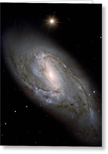 Glister Greeting Cards - Messier 66 Greeting Card by Celestial Images