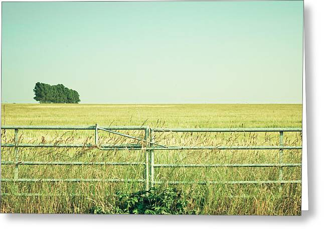 Border Photographs Greeting Cards - Metal gate Greeting Card by Tom Gowanlock