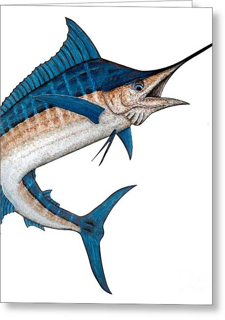 Wild Life Drawings Greeting Cards - Metal Marlin Realistic Greeting Card by Carol Lynne