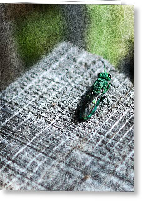 Spider And Fly Greeting Cards - Metallic Armor Greeting Card by Melanie Lankford Photography