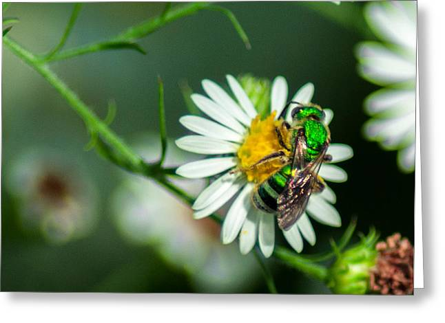 Perspiration Greeting Cards - Metallic Green Sweat Bee Greeting Card by Optical Playground By MP Ray
