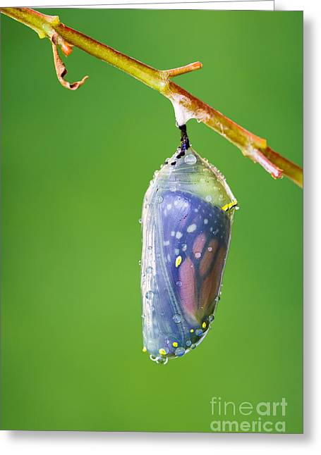Metamorphosis Greeting Card by Dawna  Moore Photography