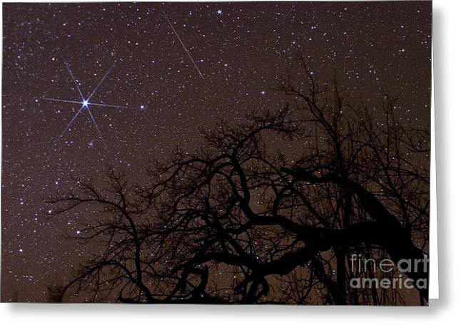 Sirius Greeting Cards - Meteor And Sirius Greeting Card by Babak Tafreshi