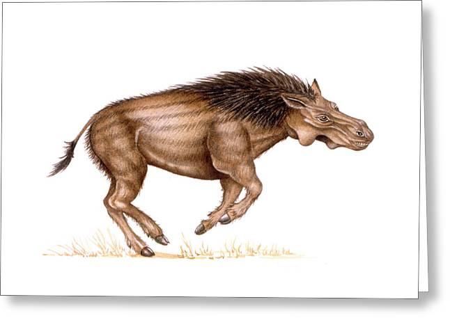 Metridiochoerus Prehistoric Pig Greeting Card by Deagostini/uig