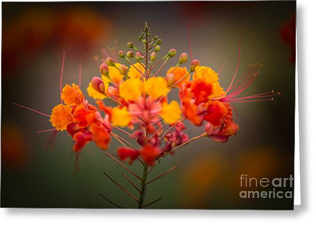 Bird Brain Greeting Cards - Mexican Bird of Paradise Greeting Card by Doug Sturgess