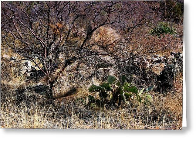 Las Cruces Digital Art Greeting Cards - Mexican Grey Wolf Desertscape Greeting Card by Barbara Chichester