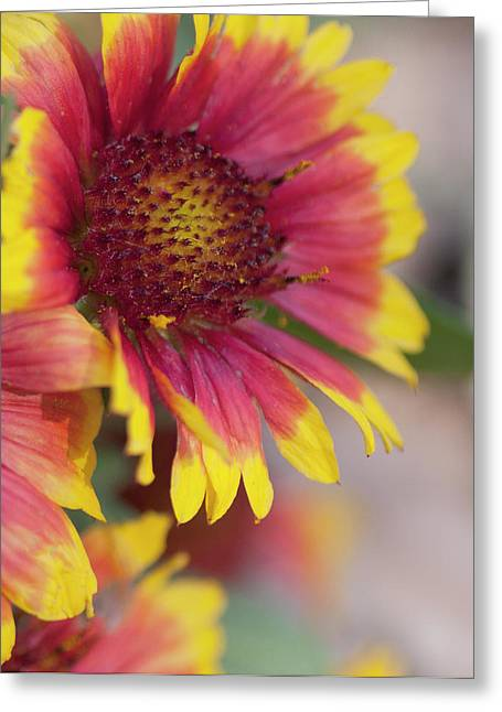 Sun Photographs Greeting Cards - Mexican Hat Greeting Card by Gilbert Artiaga