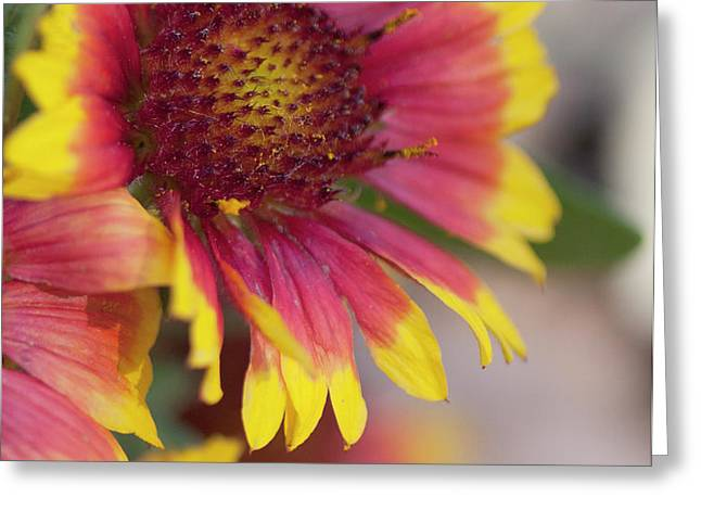 Mexican Hat Greeting Card by Gilbert Artiaga