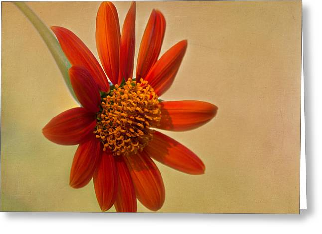 Yellow Sunflower Greeting Cards - Mexican Orange Sunflower Greeting Card by Kim Hojnacki