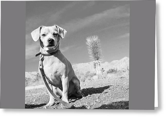 Pound Puppies Greeting Cards - Mi PRiNCeSS Greeting Card by Angela J Wright