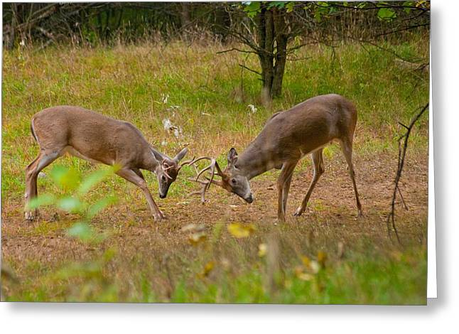 Sparring Greeting Cards - Michigan Bucks 0101 4510 Greeting Card by Michael Peychich