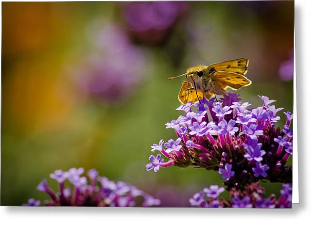 Nature Center Pond Greeting Cards - Michigan Skipper Moth Greeting Card by LeeAnn McLaneGoetz McLaneGoetzStudioLLCcom