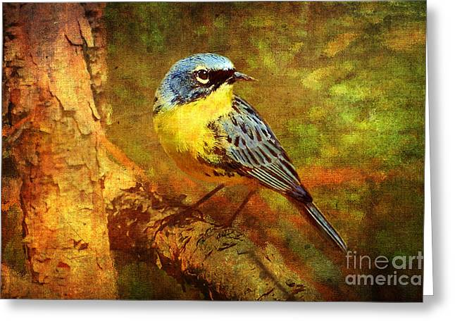 Berry Greeting Cards - Michigans Rare Kirtlands Warbler Greeting Card by Lianne Schneider