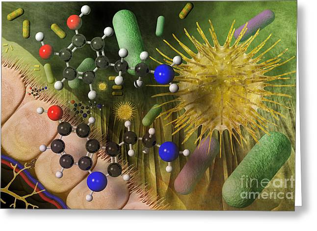 Dopamine Greeting Cards - Microbiome, Dopamine And Serotonin Greeting Card by Carol and Mike Werner