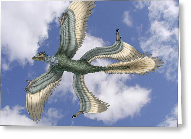 Dromaeosaurid Greeting Cards - Microraptor Greeting Card by Spencer Sutton