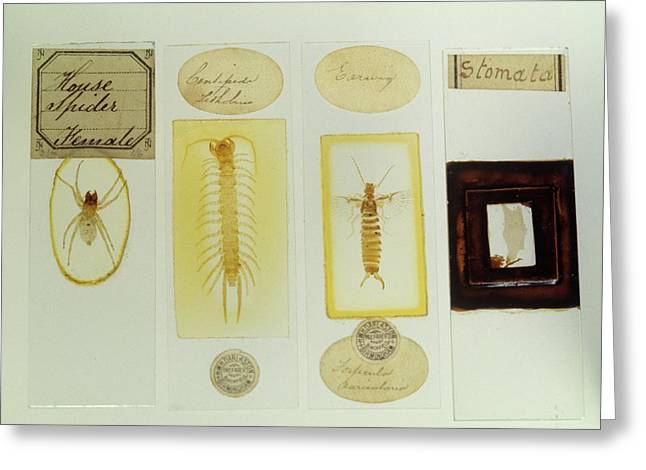 Microscope Slides Greeting Card by Science Photo Library