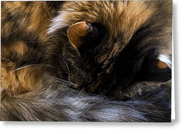 Napping Cat Greeting Cards - Mid Day Nap Greeting Card by Andrew Pacheco